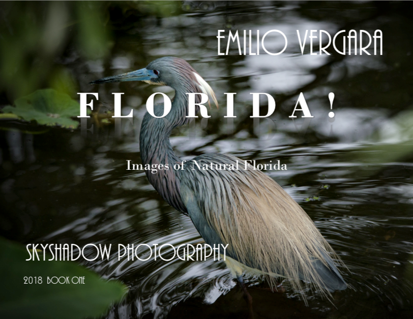 Cover photo of FLORIDA! Images of Natural Florida by Emilio Vergara features a multicolored bird wading in shallow water.  Published in 2018, the book is available for $50.